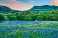 texas bluebonnets, bluebonnets, texas hill country, hill country, texas wildflowers, longhorn, cattle, wildflowers, blue bonnets, dusk, sunset, lupinus texensis, central texas, hills, lupine, lone sta