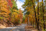 fall, autumn, drive, yellow, orange, pine, cypress, trees, shades, yellow, orange, rust, colors, fall colors, Tower Mountain, road, arkansas, national, forest, october, curves, sun light, tree line ro