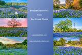 Texas, bluebonnets, texas bluebonnets, texas wildflowers, lupines, wallart, home decor, interiors, hospitality, murals,