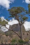 Big Bend National Park, Casa Grande, Chiso Basin, Mountains, hike, hiking, landscape, peak