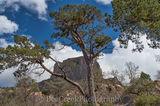 Big Bend National Park, Casa Grande, Mountains, landscape, peak, tree, up close, view
