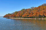cypress, colorful, fall, fall colors, colorful, trees, autumn, rusty, orange, reds, banks, scene, scenery, wilderness, blue sky, forest, Lake Nimrod, arkansas, blue sky, cypress stumps, fall foliage