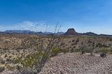 Ocotillo, big bend, desert, distant views, landscape, mountain
