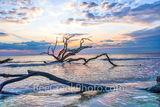 driftwood beach, driftwood, jekyll island, sunrise, trees, tide, deadwood, surf, rays, Alantic ocean, georgia, golden isles, east coast, coastal, ocean