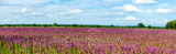 lemon horsemint, flowers, lavendar, purple, pink, field, farmland, crop, farm land, texas hill country, pano, panorama, landscape, commericial crops, seeds, plant, horsemint, blooms