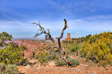 Grand Canyon, Grand Canyons, colors, geologic, geology, red rocks, sandstone, time, tree, watchtower