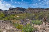 Big Bend State Park, Rio Grande, bluebonnets, flowers, landscape, wildflowers