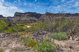 Big Bend State Park, Rio Grande, bluebonnets, flowers, landscape, wildflowers