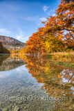 garner state park, frio river, autumn, bald cypress, texas hill country, fall, old baldy, river, water, reflections, golden, rusty, cypress, hill country, fall scenery, autumn scenery, golden, orange,