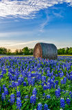 Texas bluebonnets, hay bales, vertical format, lovely bluebonnets, rural, wildflowers, field,Texas Bluebonnets with Hay bales, farm