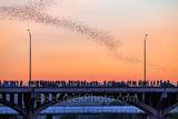 Austin, Congress, Bats, bridge, downtown, Ann Richard Congress Bridge, dusk, people, crowds, Austin bat watch, downtown, Austin bat