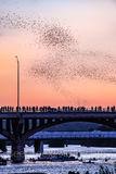 Austin Bats Vertical, Austin, Congress, Bats, bridge, downtown, Ann Richard Congress Bridge, dusk, people, crowds, Austin bat watch, downtown, boat, tour boats