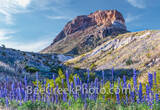 Big Bend National Park, image of bluebonnets, Cerro Castillian, mountains, desert, big bend, texas bluebonnets, Big Bend Bluebonnets, Big Bend Lupine, Havard Bluebonnet, Chisos Bluebonnet, lupine, tex