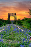 bluebonnet, texas bluebonnets, railroad tracks, tressel,  sunrise, texas hill country, texas bluebonnets, bluebonnets, vertical, orange sky, hill country, train tracks, sunset, bluebonnet, bluebonnets