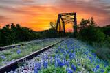 bluebonnet, texas bluebonnets, railroad tracks, tressel,  sunrise, texas hill country, texas bluebonnets, bluebonnets, orange sky, hill country, train tracks, sunset, bluebonnet, bluebonnets, west tex