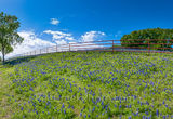 bluebonnet, fence, landscape, wildflower, blue sky, white puffy clouds, large trees, bluebonnet wildflower landscape