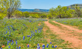 Bluebonnets, Willow City Loop, Texas hill country, dirt road, wildflowers, hills