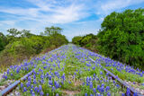 Bluebonnets Landscape on the Tracks