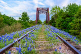 Bluebonnets Wildflowers Along the Track