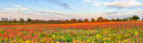Texas Wildflowers, wildflowers, bluebonnets, indian paintbrush, yellow daisys, phlox, perky sues, texas, central texas, south texas, floral, flowers, plants, colorfuwildflowers,,backroads, pano, panor