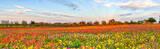 Colorful Wildflowers Panorama