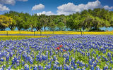 wildflowers, bluebonnets, blue bonnets, yellow perky sues, river, texas hill country, indian paintbrush, red, bluebonnet field, landscape, colorful,  springtime