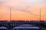 Austin, Congress, Bats, bridge, downtown, Ann Richard Congress Bridge, dusk, people, crowds, Austin bat watch, downtown, Congress Bridge Bats