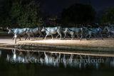 Dallad, Pioneer Plaza Park, cattle drive, city, cityscape, downtown, reflections, longhorns, park