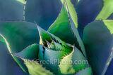 agave, desert, desert plant, century plant, hardy, art, fineart, plant, leaves, spines, thorns, green, red spines, fine art, succulent plant, rosette shape, flower spire, texas hill country,