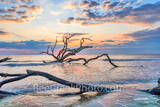 driftwood beach, driftwood, jekyll island, sunrise, trees, tide, deadwood, surf, rays, Alantic ocean, georgia, golden isles, east coast, coastal, ocean, beach,