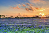 bluebonnets, bluebonnet, sunset, sunsets, field, field of bluebonnets, blue bonnets, fiery sky, colorful, red, yellows, orange, purple, landscape, landscapes, Texas Hill Country, spring, spring flower