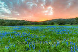 bluebonnets, sunsets, field, field of bluebonnets, blue bonnets, fiery sky, colorful, red, yellows, orange, purple, landscape, landscapes, Texas Hill Country, vivid, fiery, stunning,spring flowers, sp