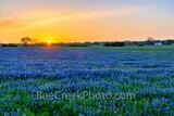 Golden Glow over Bluebonnet Landscape