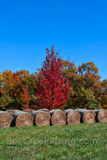 hay bales, autumn, fall, colors, ozark, trees, grass, nature, reds, oranges, greens, season, rural, vertical