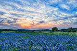 bluebonnets, hill country, texas, sunset, glow, clouds, sky, colorful, awesome, blue coloful, landscape, rural landscape, old farm house, PEC office
