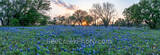 Hill Country Bluebonnet Sunset Pano