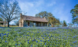 bluebonnets,, blue bonnets, log cabin, historic, wildflowers, field, landscapes, images of texas, texas wildflowers, spring flowers, spring, springtime, flora, plants, natural