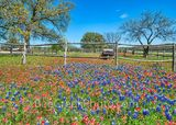 Old wagon, bluebonnet, bluebonnet landscape, indian paintbrush, wildflower, wildflowers, roadside. Hill country, Texas, images of texas, spring flowers, springtime, spring, landscape