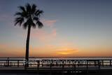 Palm Sunset, sunset, palm tree, south padre island, laquna madre, padre island, seashore, beach. beach scene, boardwalk, island, coastal, seascape, landscape