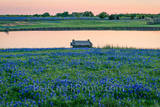 Texas bluebonnets, bluebonnet, rural, dusk, pond, tank, water edge, pier, pink, orange, wildflowers