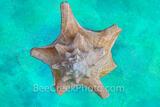 Sea Shell Abstract