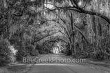 Spanish Moss Tree Tunnel Georgia Coast BW