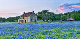 Bluebonnet, bluebonnets, blue bonnets, bluebonnet house, Marble Falls,  farm house, storm cloud, sunset, stone farm house, farm equipment, landscape, indian paint brush, red, wildflowers