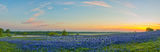 Bluebonnets, bluebonnet, blue bonnets, sunrise, ranch, texas, pano, panorama, field of bluebonnets, watering, tank, clouds, colors, Ennis, morning