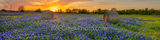 texas bluebonnets, sunset, haybales, hay bales, pictures of bluebonnets, texas landscape, texas wildflowers, rural, rural landscape, field of bluebonnets, pano, panorama, bluebonnets, blue bonnets, wi