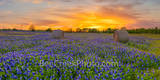 Texas Bluebonnets, bluebonnets, sunset, hay bales, sunrays, sun rays, red, popped, colorful, flowers, wildflowers, indian paintbrush, Sunset Over Texas Bluebonnets, Sunset Over Texas Bluebonnets Wild