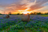 Texas bluebonnet, sunset, hay bales, sunset colored sky, sun rays, rural, wildflowers