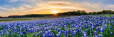 Sunset Over the Bluebonnets Pano
