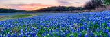 Sunset Over the Parks Bluebonnets Pano
