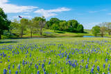 Ennis, Texas bluebonnet landscape, bluebonnets, landscape, texas, wildflowers, wildflower, blue sky, creek, Texas flag